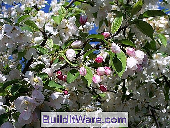 Crabapple Selection Guide